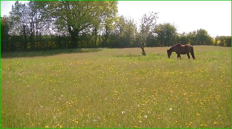 Le vieux cheval de Tonton